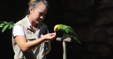 The Amazon Parrot Can Live About How Long