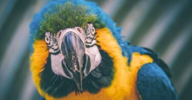 Lifespan of a Macaw Parrot