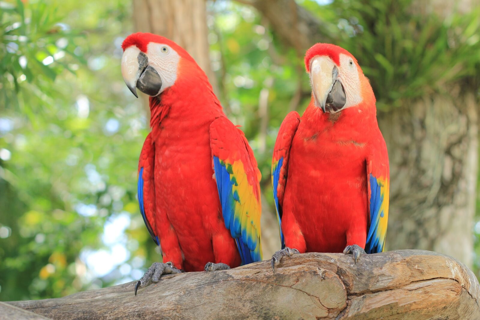Where Does A Macaw Live?