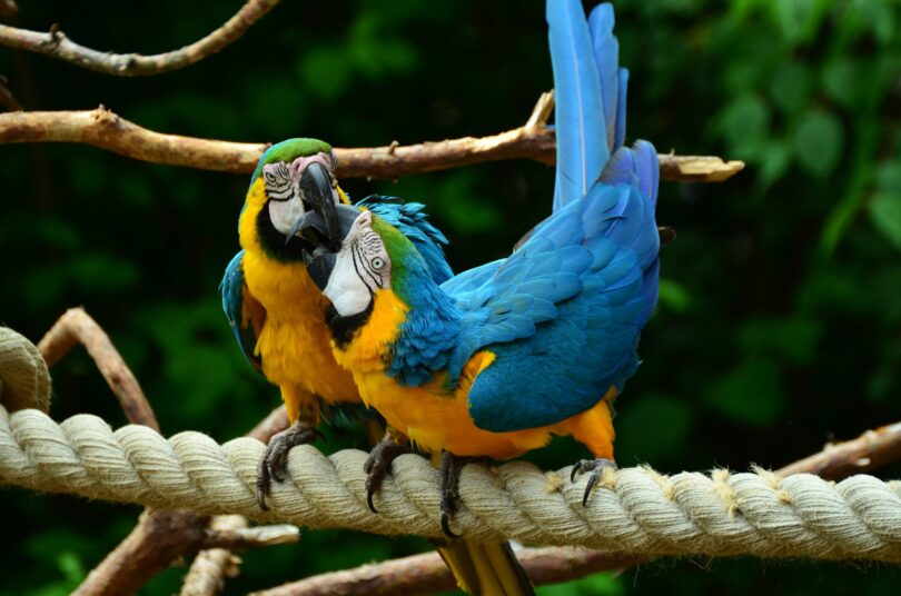 Facts About Macaws in The Rainforest