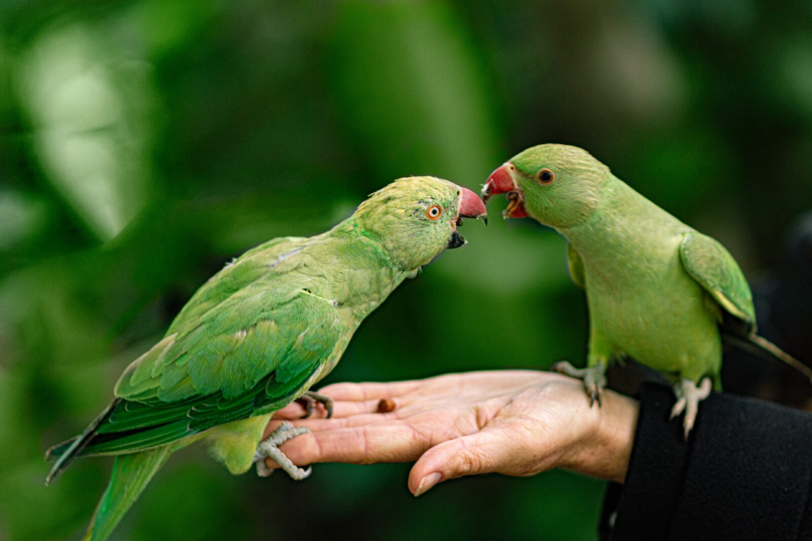 What Parrot Is Right For Me?