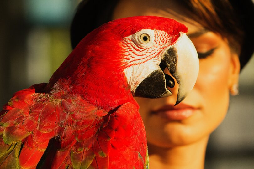 How Long Does A Parrot Live?