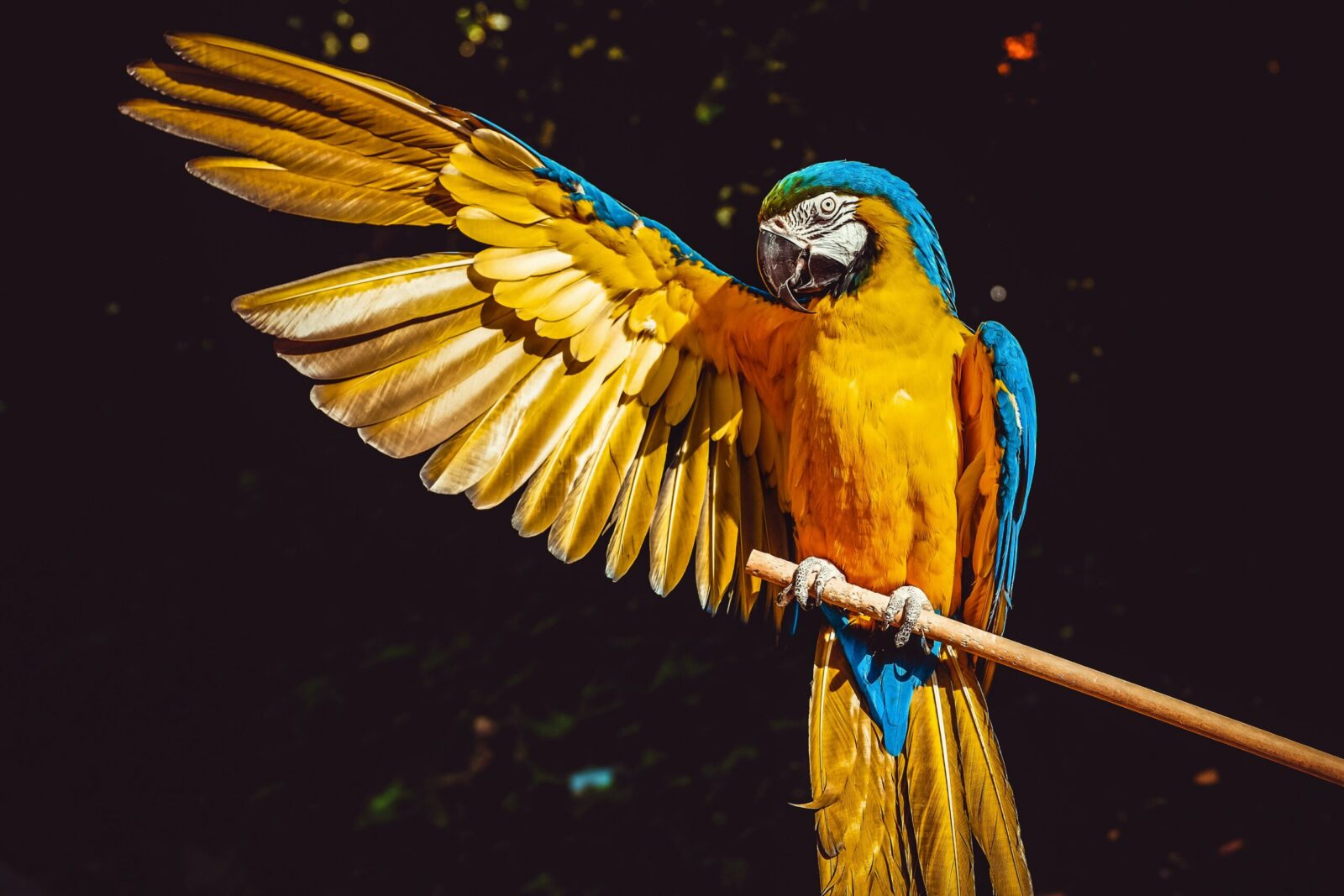 Blue and Gold Macaw Diet