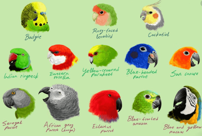 How Many Types Of Parrots Are There?