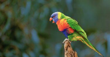 How Come Parrots Can Talk?