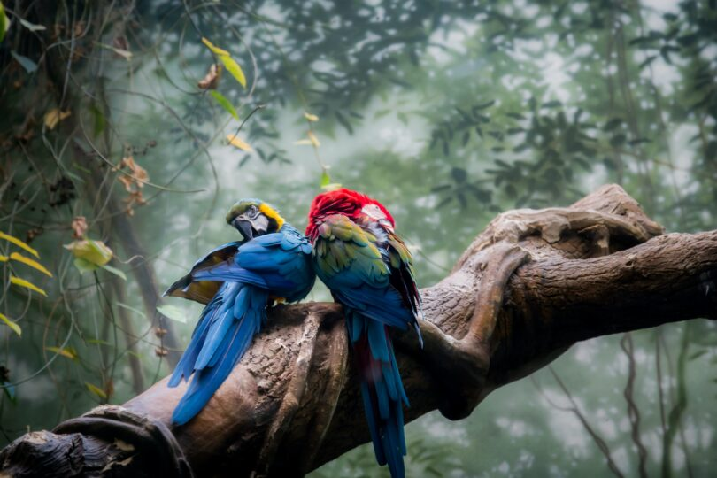 How Much Do Parrots Cost?