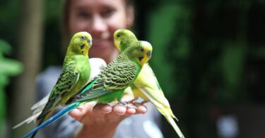 Types Of Green Parrot